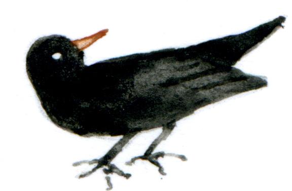 black bird looking back
