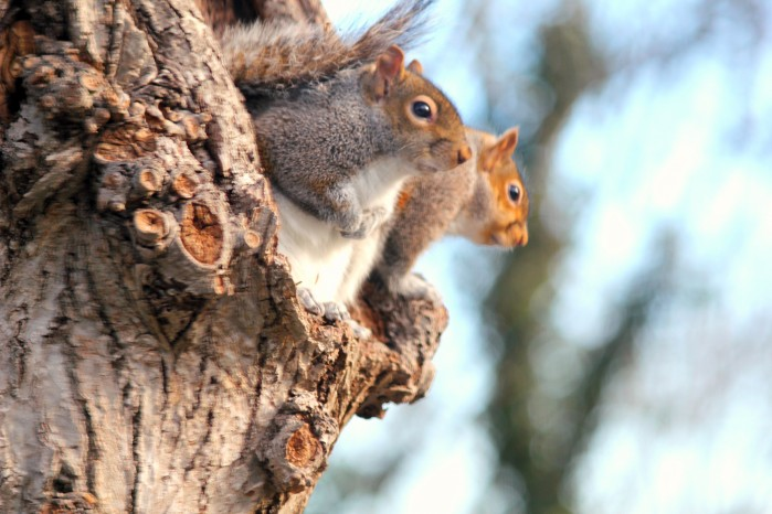squirrels outside the bathroom window