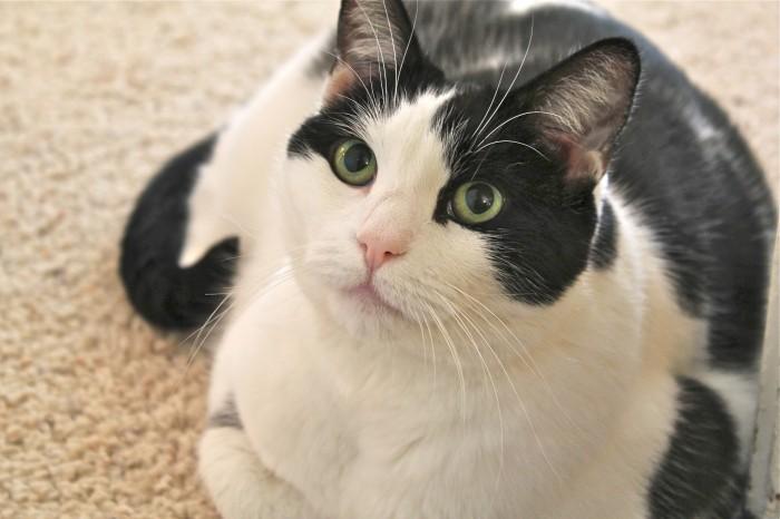 Beautiful Girl Kitty