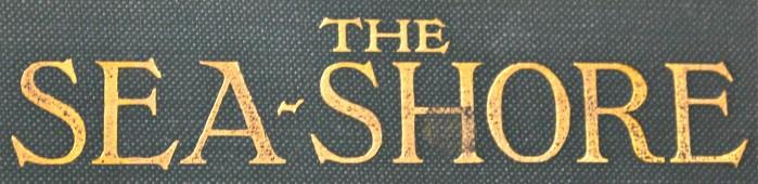 sea shore book