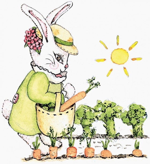 bunnyinthecarrotpatch
