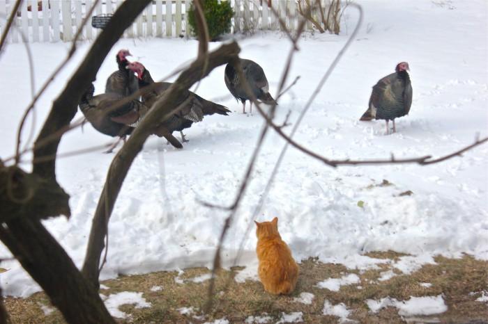 Turkey standoff