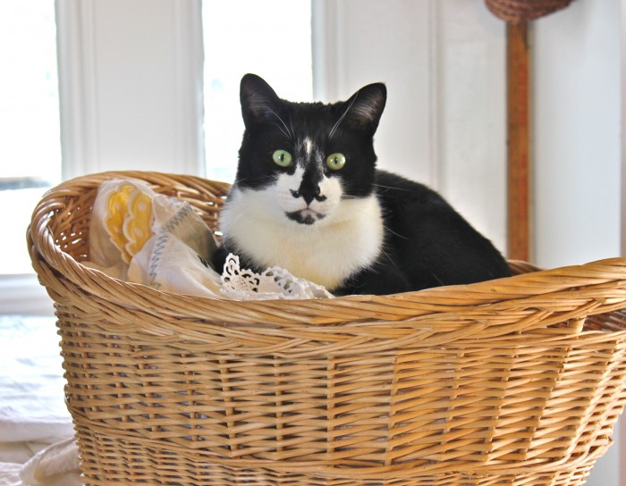 jack in the basket
