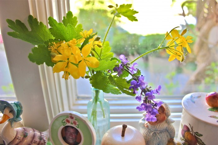 wildflowers and cat mint