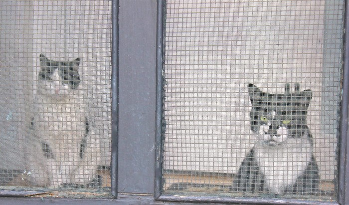 cats waiting