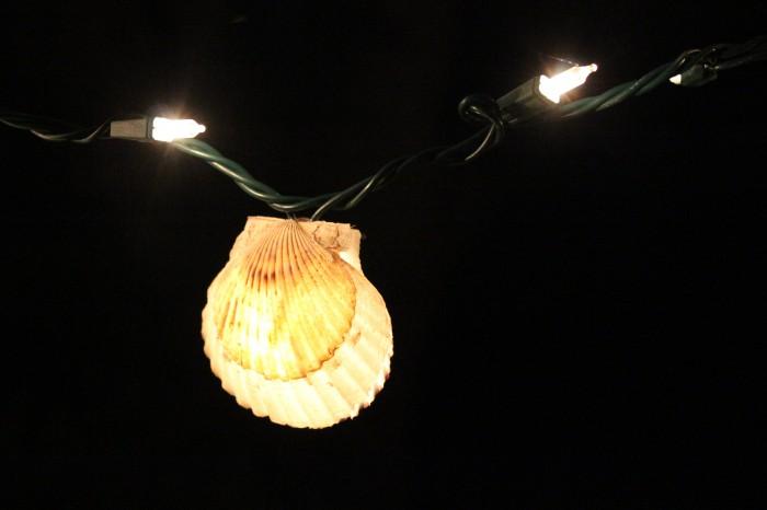 clam lights