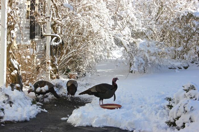 Martha's Vineyard winter 2014
