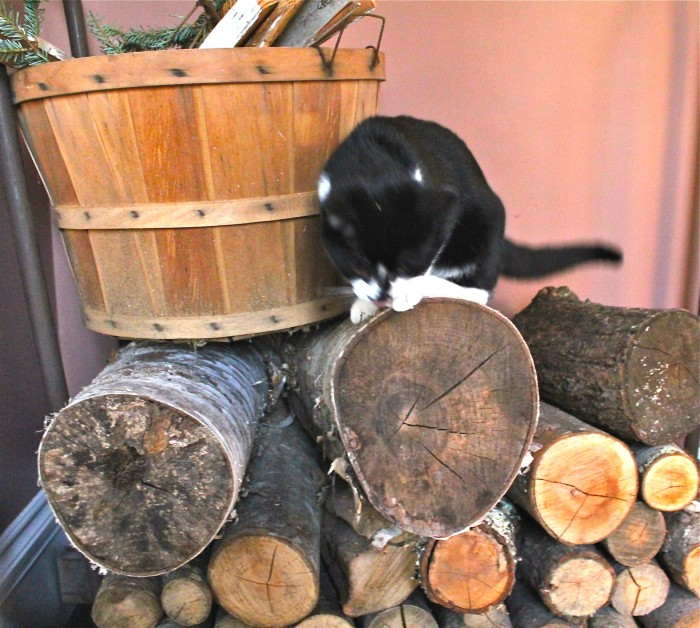 Jack in the woodpile