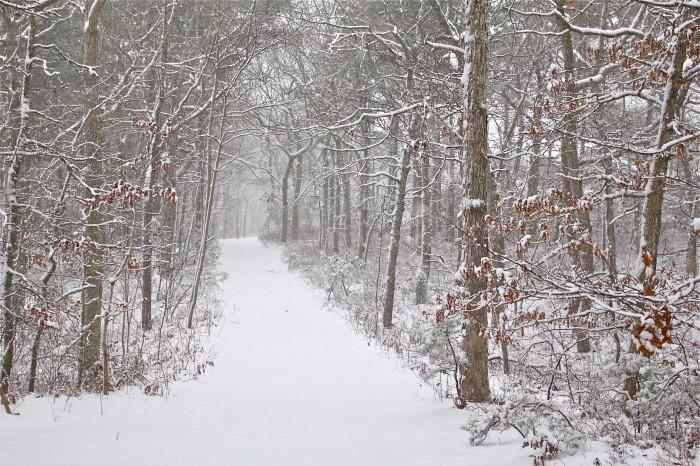 pristine walk in the woods