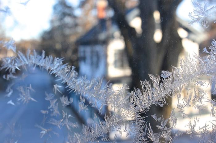 ice feathers on the windows
