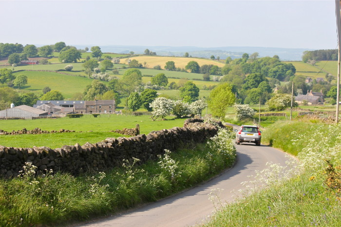 road lined in cow parsley