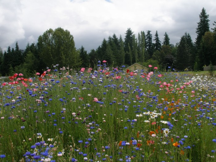 they mow through the wildflowers