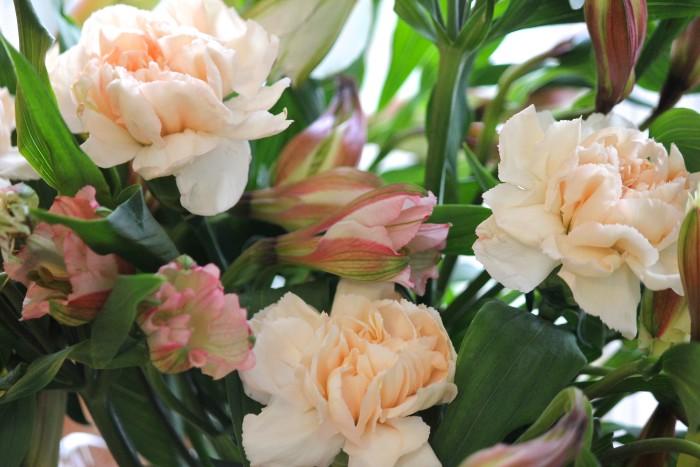 carnations alstroemeria