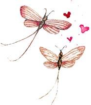 butterflies in love