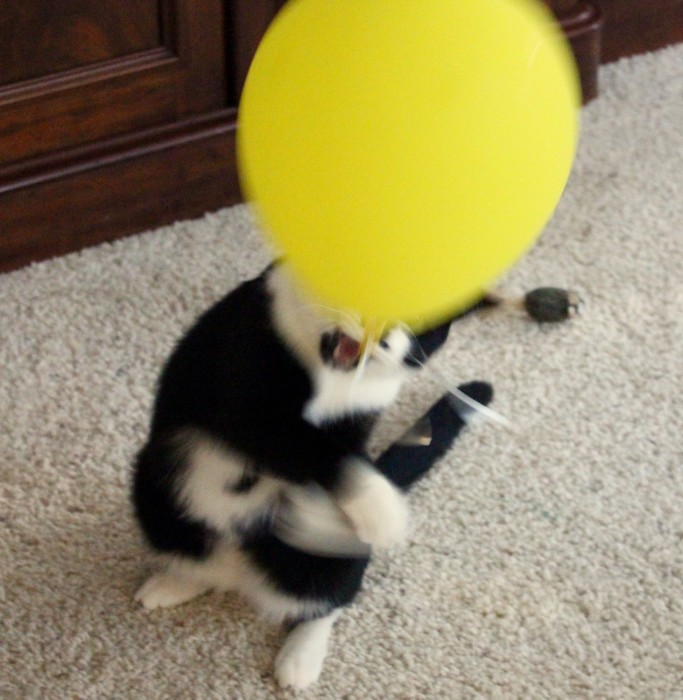 Jack and the balloon