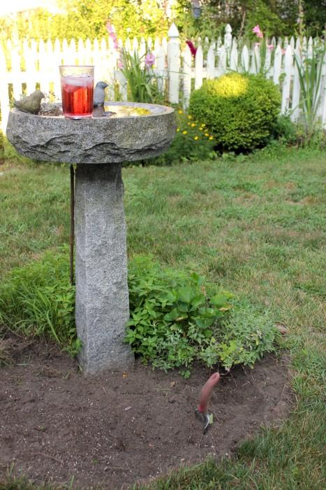 planting under the bird feeder