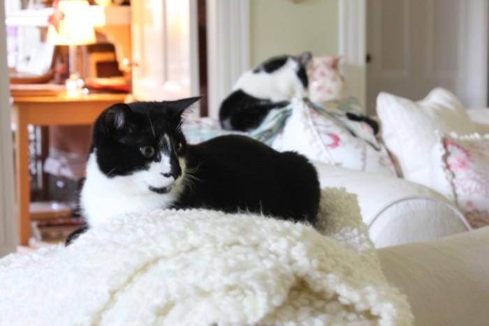 Jack and Girl Kitty
