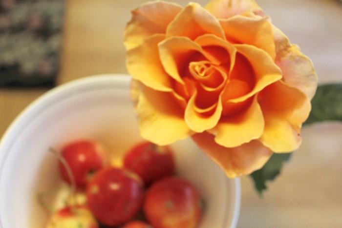 last rose of season