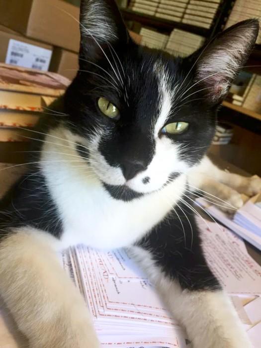 sammy, Studio cat