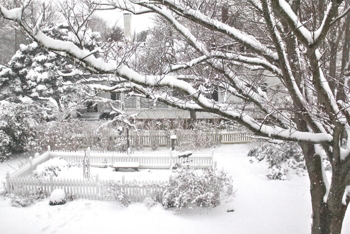 Kitchen garden in winter