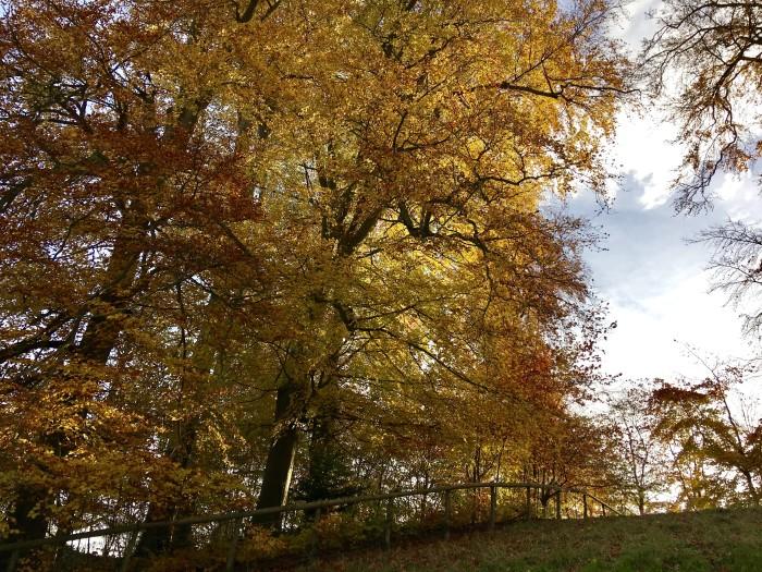 fall climbing hill woodstock