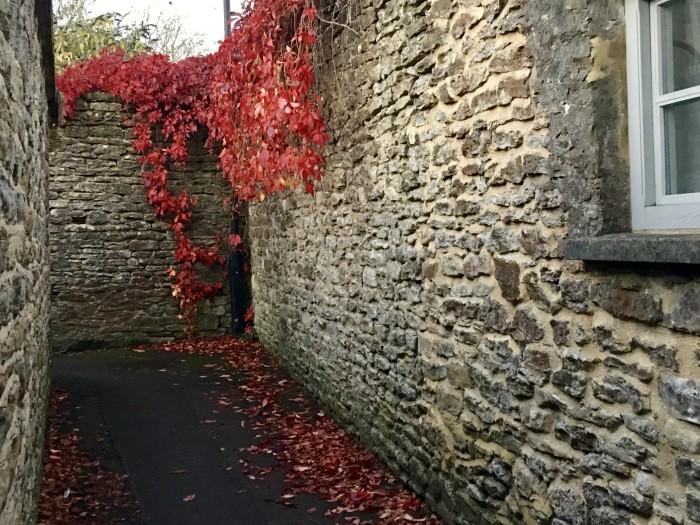 endorse fall walk following siobhan around malmesbury