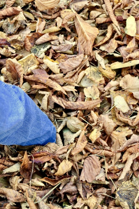 foot lost in leaves